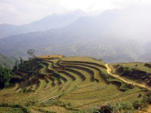 Accords avec le Vietnam : pour les droits humains, pour le climat, c'est non !